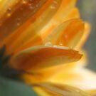 Calendula In The Rain by Tracy Wazny