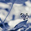 Fragile II by SylBe