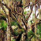 Swamp Woods by Rosalie Scanlon