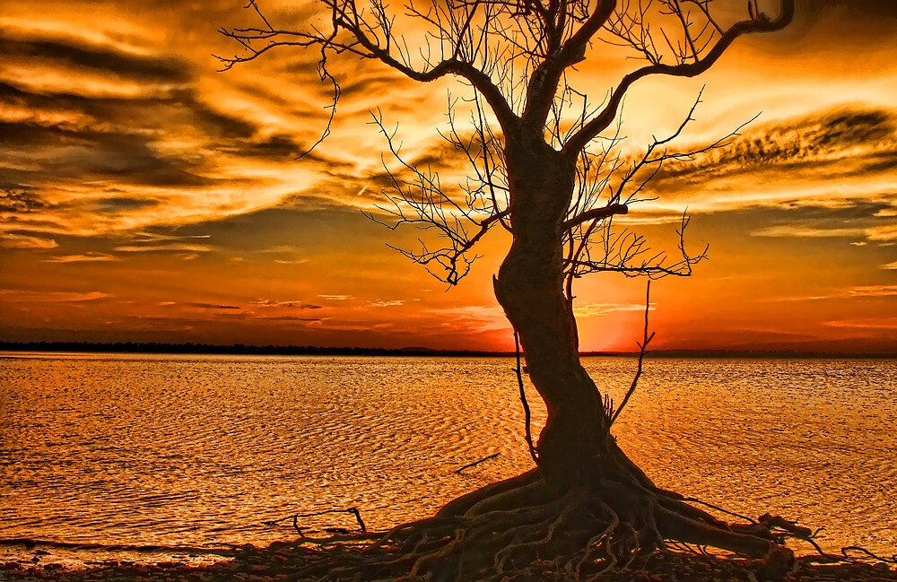 Dead Tree At Sunset by Carolyn  Fletcher