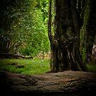 The Greens by David  Preston