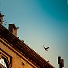 Pigeon in flight by Jakov Cordina