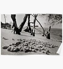Coonah Crab Balls Poster