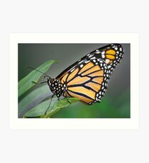 Wild Faces: Butterfly Art Print