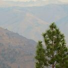 hells canyon outlook 2 by Bruce  Dickson