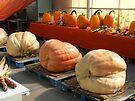 Huge Pumpkins! by Stephen D. Miller