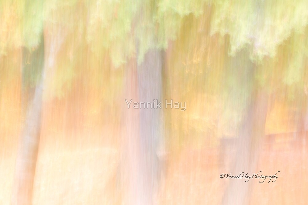 """Panning""   Trees - 2 - Impressions by Yannik Hay"
