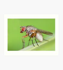 Fly Resting On Leaf Art Print