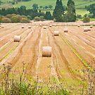Farming Landscape by Sue Knowles
