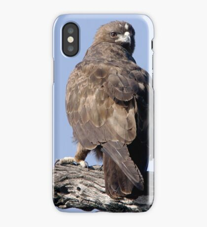 Juvenile Bataleur Eagle iPhone Case