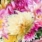 Deeper and Deeper into Dahlias by jennyjeffries