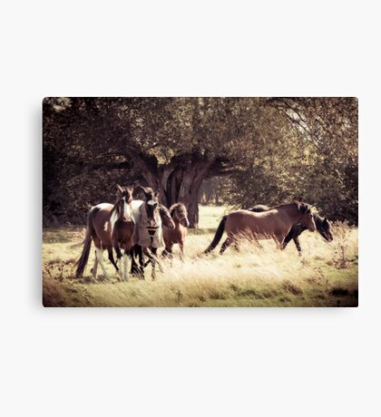 Together Again Canvas Print
