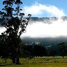 landscapes #231, the hanging mist by stickelsimages