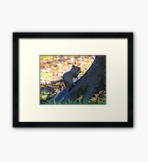 one squirrell Framed Print