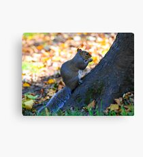 one squirrell Canvas Print