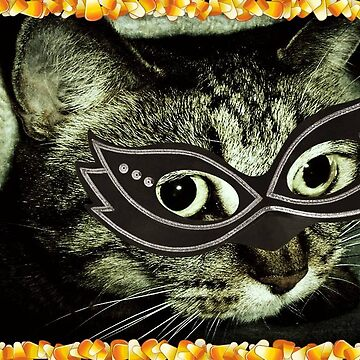 Cat Woman by dmarie