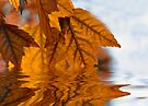 Autumn Leaf Reflections  by Elaine Manley