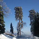 Snow In December by Bearie23