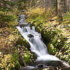 Fall Cascade  by Teresa Smith