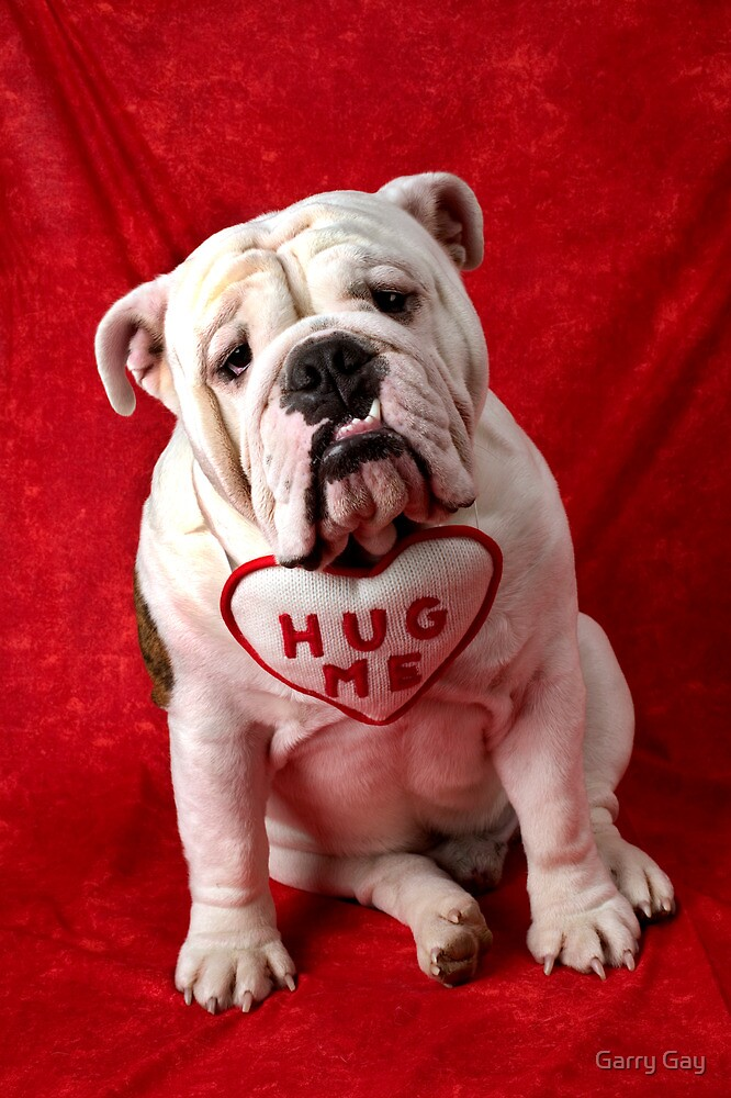 English Bulldog puppy hug me by Garry Gay