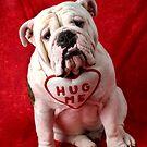 English Bulldog puppy hug me by Garry Gay