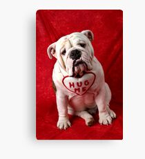 English Bulldog puppy hug me Canvas Print