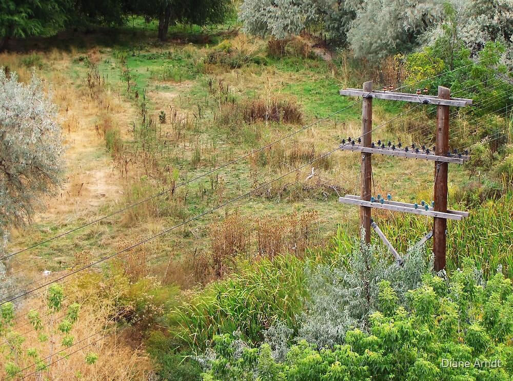 Telephone Pole by Diane Arndt