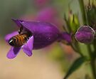 Diving For Nectar by Betsy  Seeton