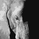 Elephant in Shadow by Nick Bradshaw