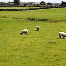 Farmland, Ireland. by JoeTravers