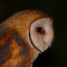 Barn Owl Profile by naturalnomad