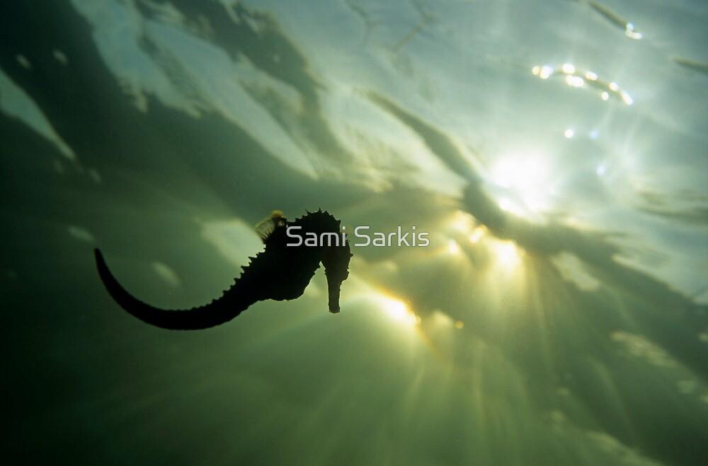Seahorse (Hippocampus sp.), silhouette, underwater view by Sami Sarkis