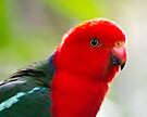 Australian King Parrot by Jason Asher