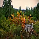 Fall In The Cascades by Charles & Patricia   Harkins ~ Picture Oregon