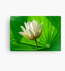Lily Pad And Bee Canvas Print
