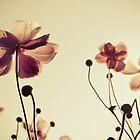 Autumn anemones by Ulla Jensen