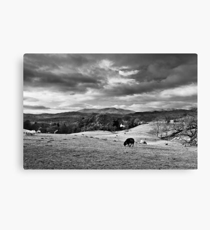 Sheep On A... Canvas Print
