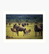 Wildebeest with Calves Art Print