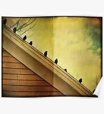 Birds in a row Poster