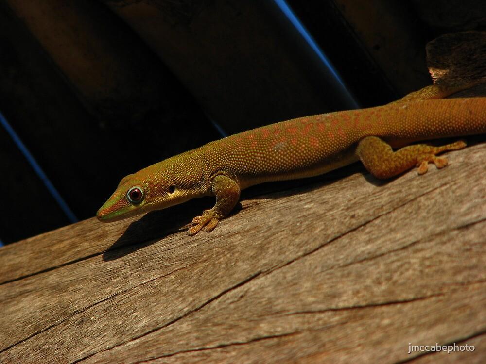 Gecko by jmccabephoto