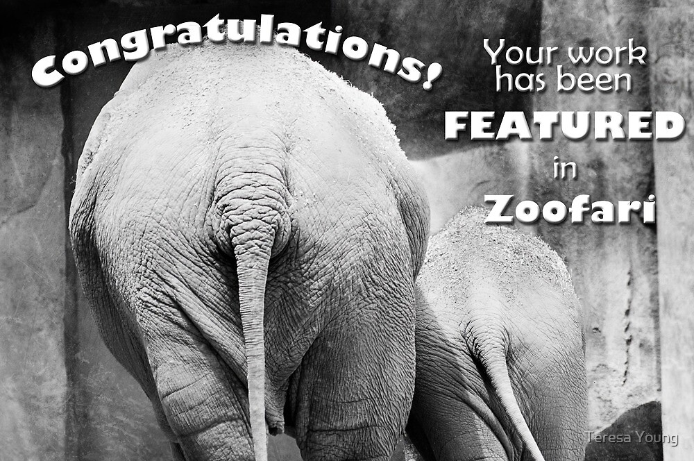 Zoofari Featured Banner by Teresa Young