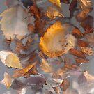 Birch Brunch.. by linmarie
