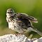 The Most Wonderful BIRDS