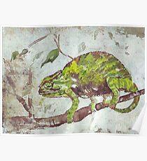 Chameleon (Chamaeleonidae) Poster