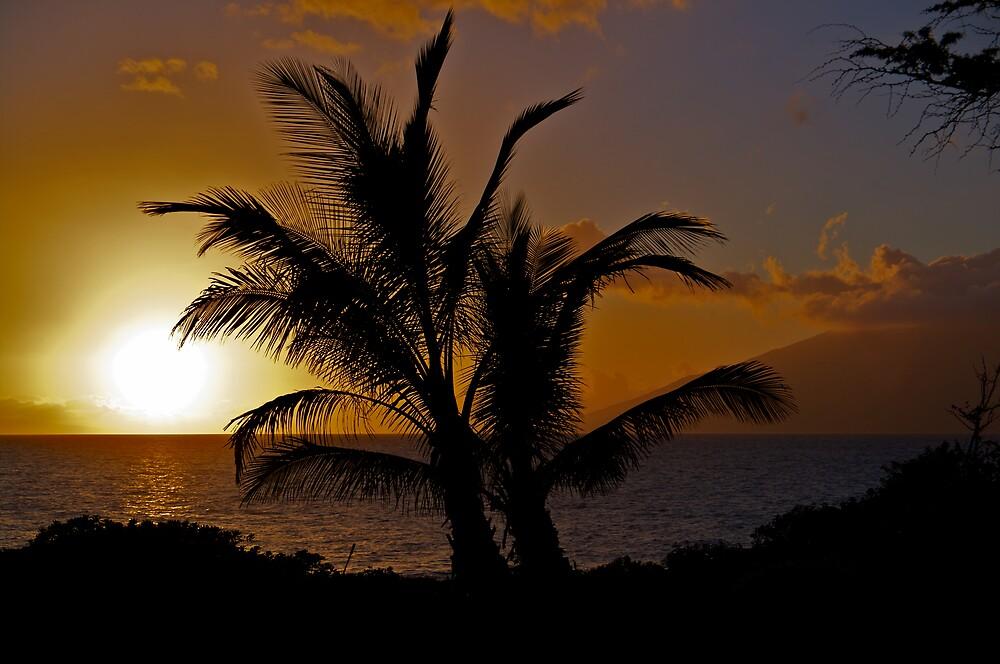 Palmtree Sunset by Mark Iocchelli