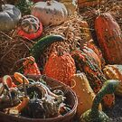 The Colors of Fall by Sally Kady