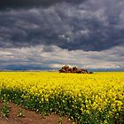 Storm Clouds Over Canola by Kazzii