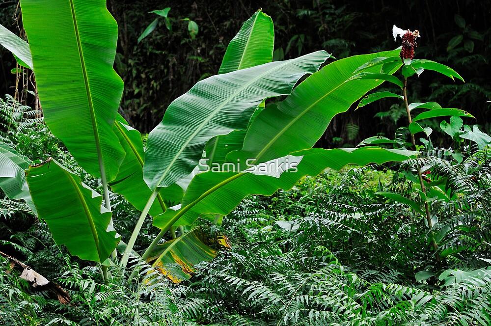Banana tree leaves in tropical garden, close-up, Big Island, Hawaii Islands, United States by Sami Sarkis