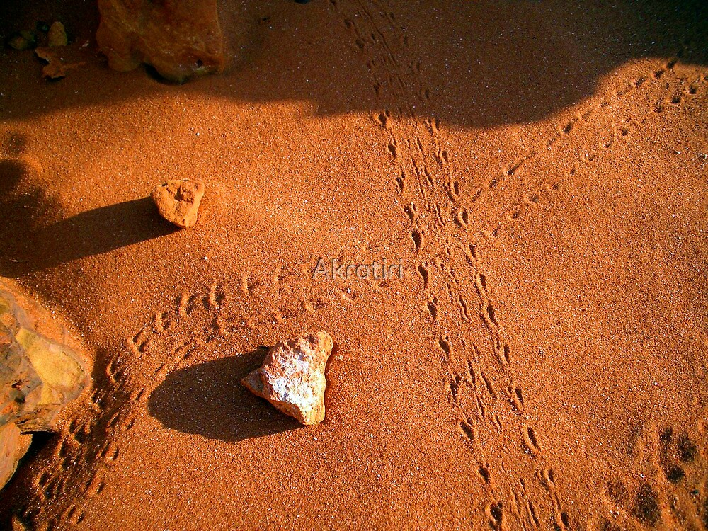 Lizard Tracks - Broome, WA. by Akrotiri