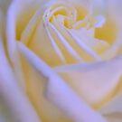 Sweet Surrender by Lozzar Flowers & Art